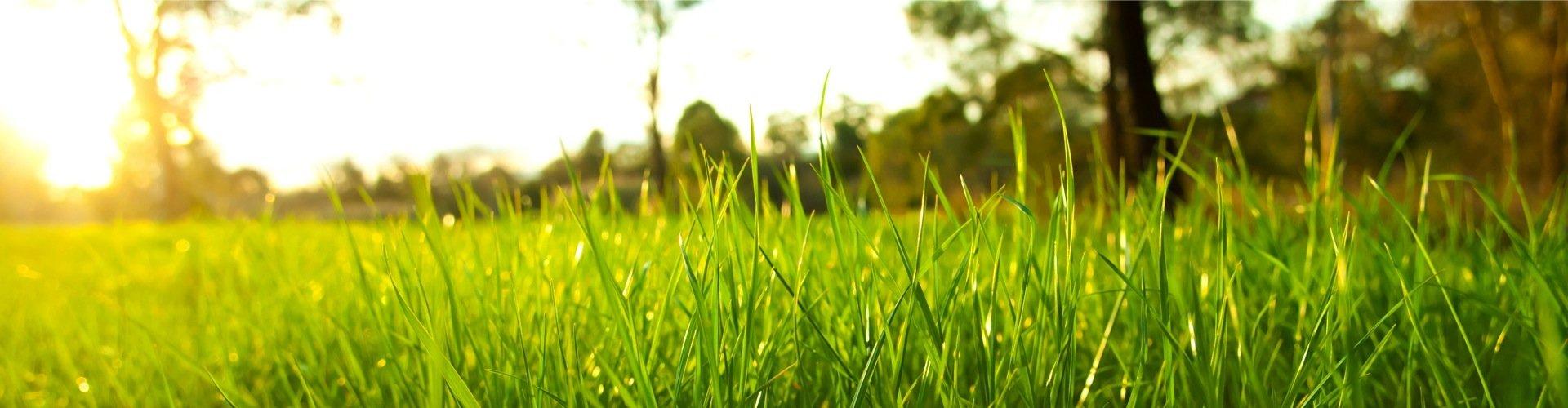 lush-grass2